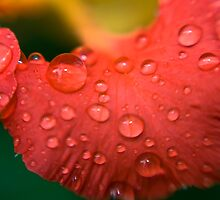 Red Water Petals by Mel Sinclair