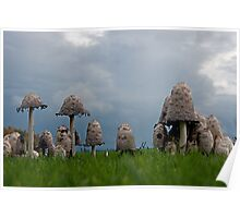 Ink cap mushrooms Poster