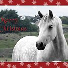 Connemara Pony Christmas Card -Type 2 by ConnemaraPony