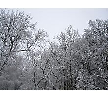 A Light Dusting Photographic Print