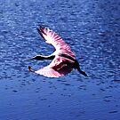 Spoonbill in Flight 2 by Nukee