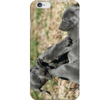 Weimaraner iPhone Case/Skin