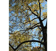 Abstracting Autumn Photographic Print