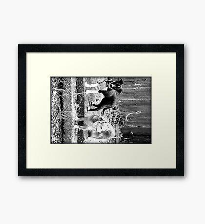 playful innocence Framed Print
