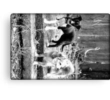 playful innocence Canvas Print