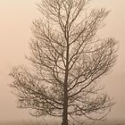 Lone tree in Mist by Julia Ott