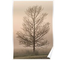 Lone tree in Mist Poster