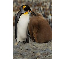 Feeding time, St Andrew's Bay, South Georgia Photographic Print