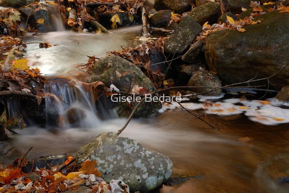 Autumn stream by Gisele Bedard