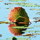 Beautiful Lilly Pad by Cynthia48