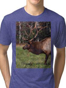 Royal Master Tri-blend T-Shirt