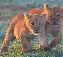Let's Stick Together by Jill Fisher