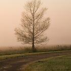 Tree in the Mist by Julia Ott