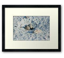 Least Tern Eggs/Nest Framed Print