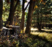 A Walk in the Woods  by Saija  Lehtonen