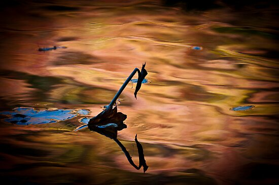 Above and below by Miron Abramovici