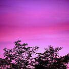 Colorful Sunset by ckredman031762