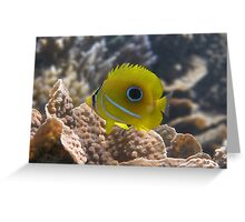 Eclipse Butterflyfish Greeting Card
