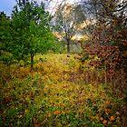 Autumn Wood Walk, Suffolk by Simon Duckworth