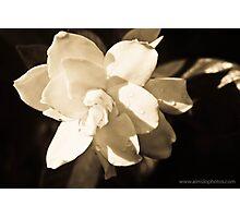 Gardenia Magnifica Photographic Print