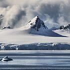 Pristine Antarctica by Robyn Lakeman