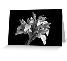 BLACK AND WHITE ORCHID Greeting Card