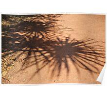 Pandanus shadows Poster