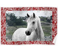 Connemara Pony Christmas Card - Type 3 Poster