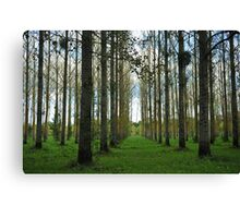 Loire Valley trees Canvas Print