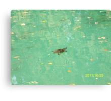 Una tartaruga nel Laghetto di Maria Luigia...Parma - Italy -visualizzazioni 400 al 28 marzo 2012 -- featured rb explore 2 febbraio 2012 --- Canvas Print