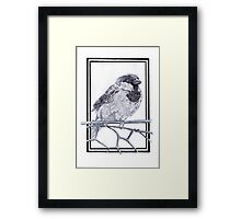 House Sparrow - Passer domesticus Framed Print