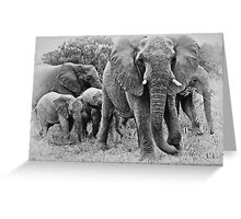 Not Too Close, I Warn You ! Greeting Card