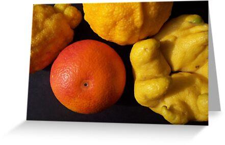Citrus sp.  by joancaronil