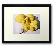 Citrus sp. and Paper Nautilus Framed Print