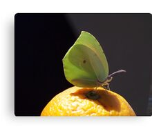 Citrus sp. and Butterfly Metal Print