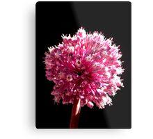 Allium sp. Metal Print