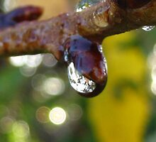 drip drop bud by millymuso