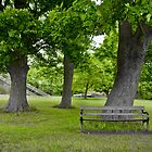 wooden bench under a tree by wildrain