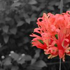 flower edit by hgriffin1