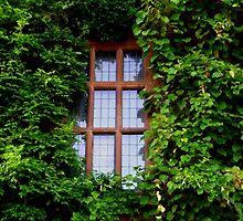 window by lorainek