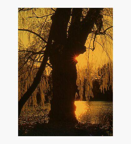 A Tree Photographic Print