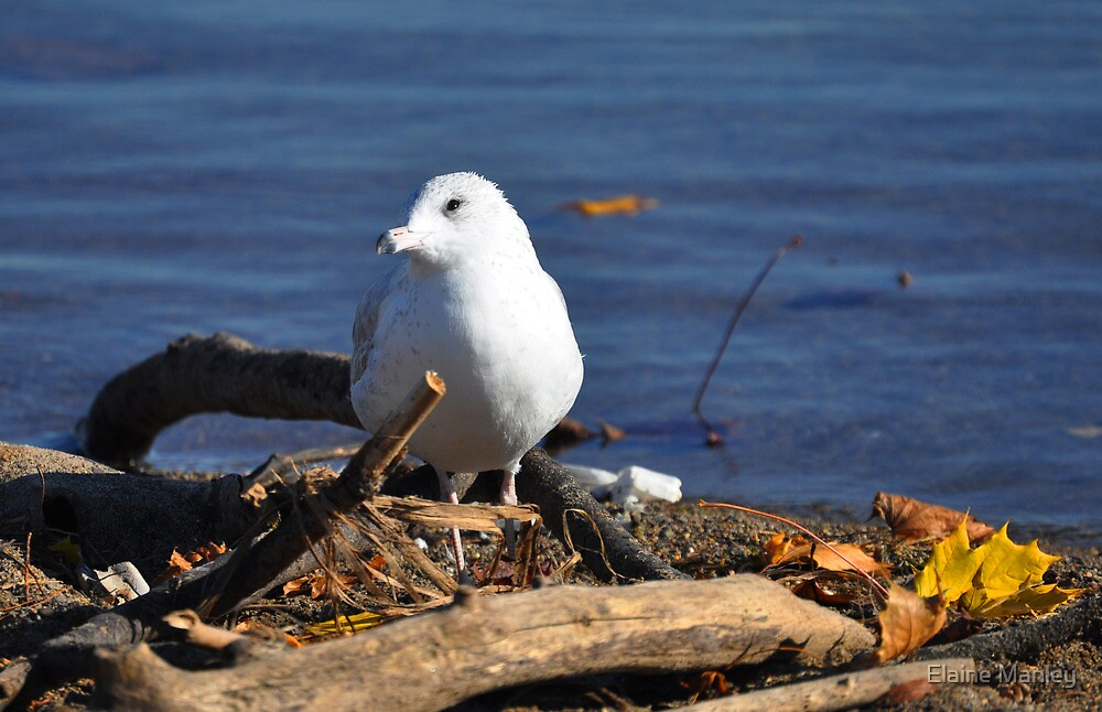Its My Best Side  by Elaine  Manley