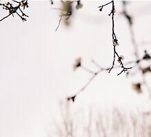 apricot blossom by bluelikasmurf