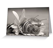 Garden Snails On Gerbera Daisy Flower Greeting Card
