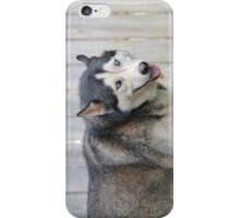 Husky I-phone Cover iPhone Case/Skin