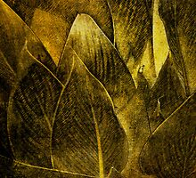 Canna In Gold by Diane Johnson-Mosley