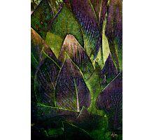 Canna In Purple Photographic Print