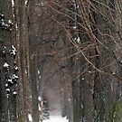 """A Snowy Nuns' Walk"" iPhone case by James Lady"