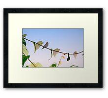 Dark-sided Flycatcher Bird Framed Print