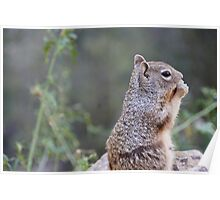 Squirrel with Nut Landscape Poster